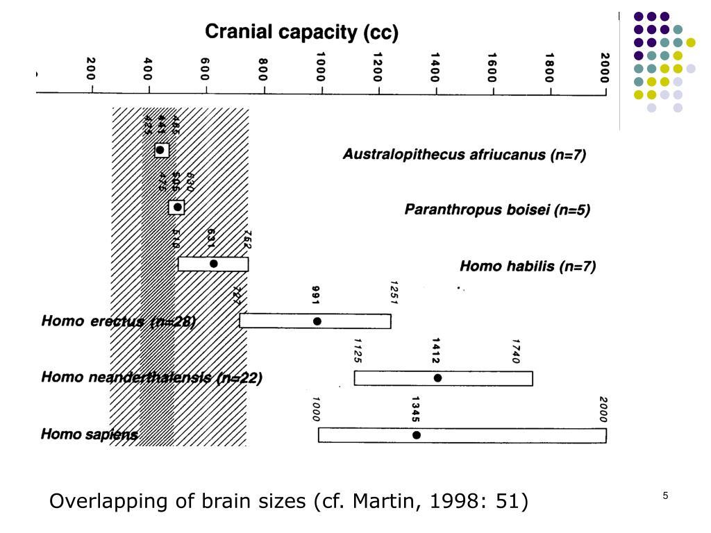 Overlapping of brain sizes (cf. Martin, 1998: 51)