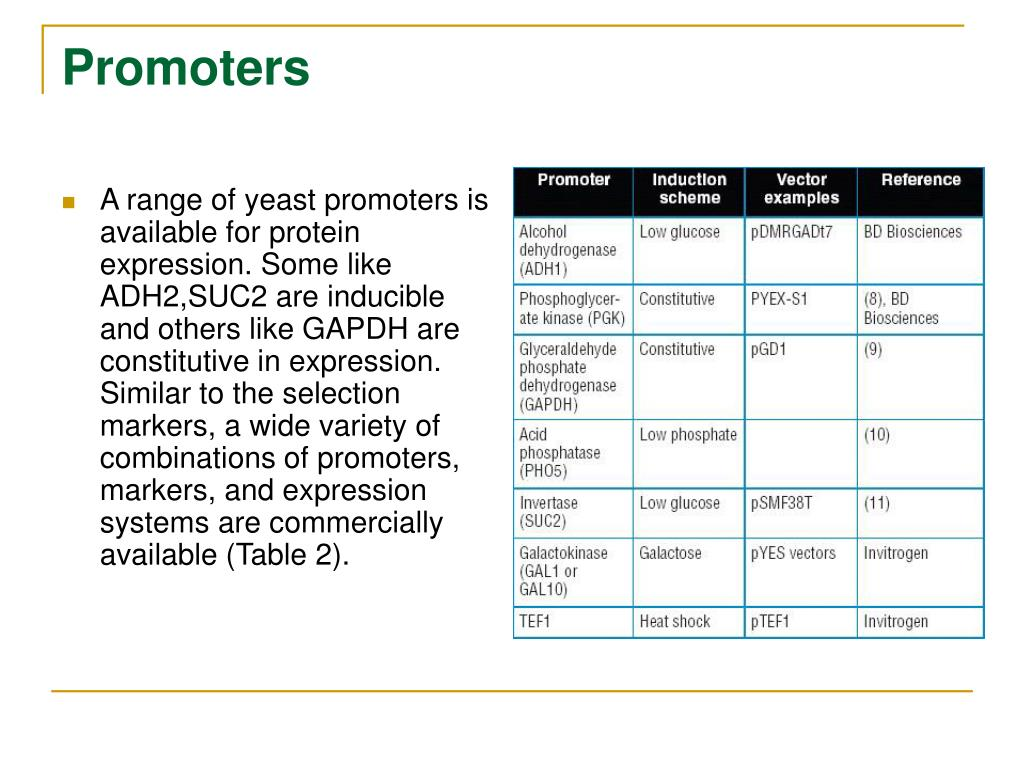 PPT - Yeast Vector System PowerPoint Presentation - ID:410218