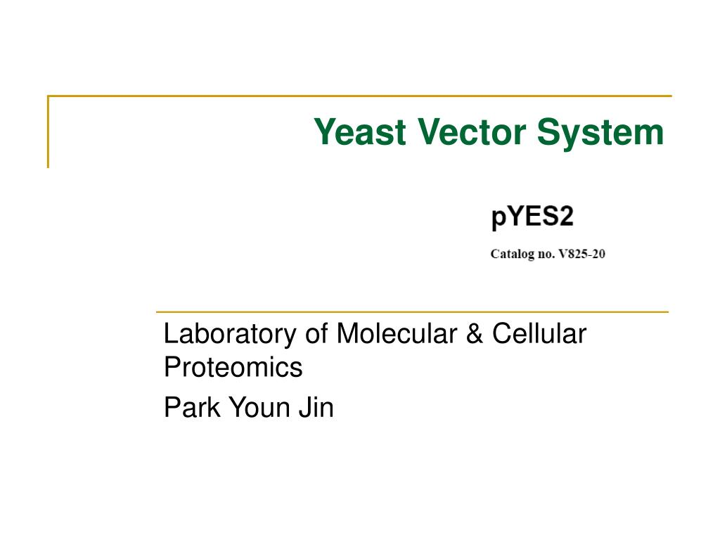 yeast vector system l.
