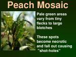 peach mosaic
