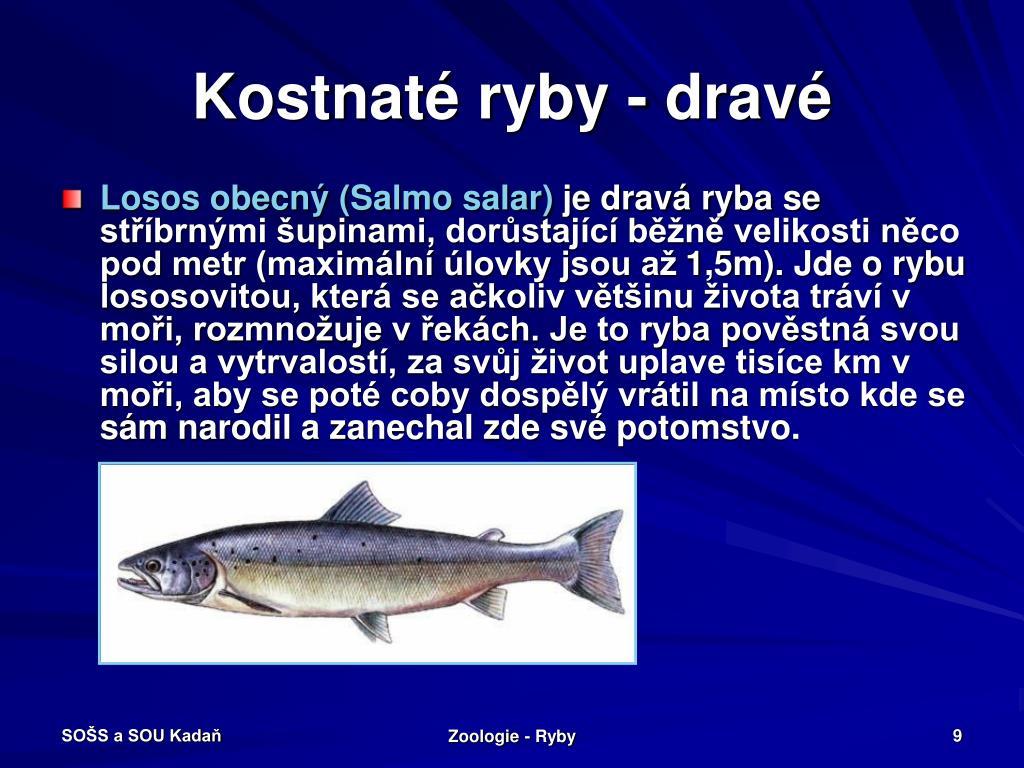 Kostnaté ryby - dravé