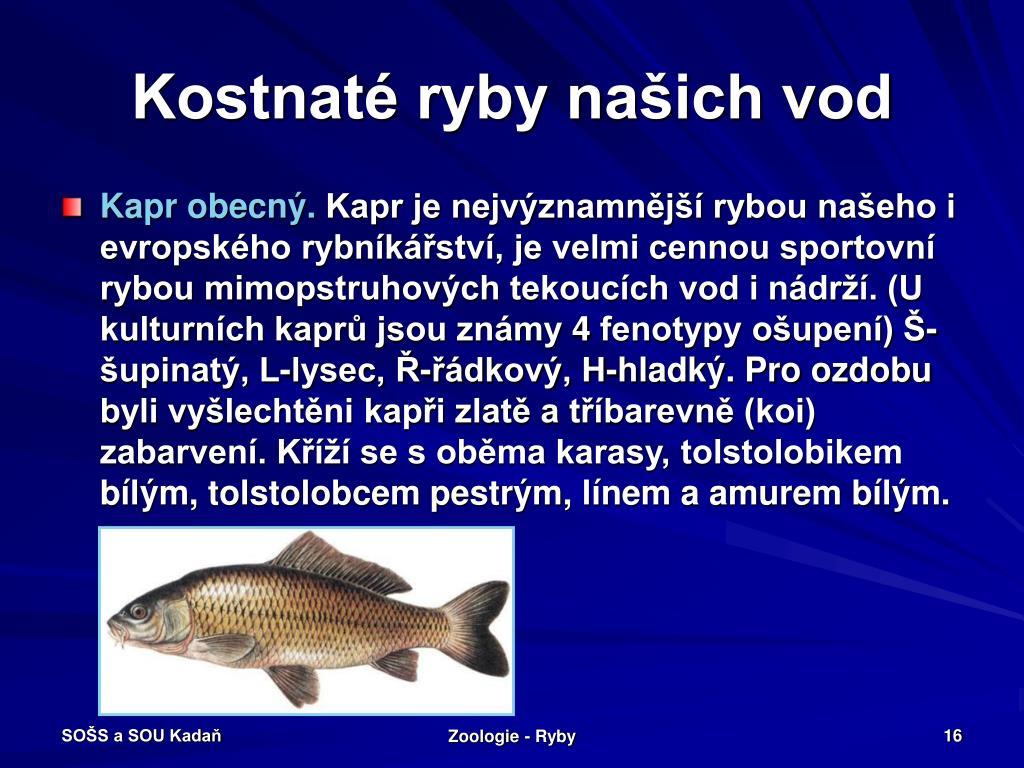 Kostnaté ryby našich vod