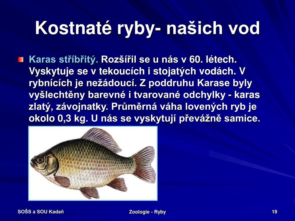 Kostnaté ryby- našich vod