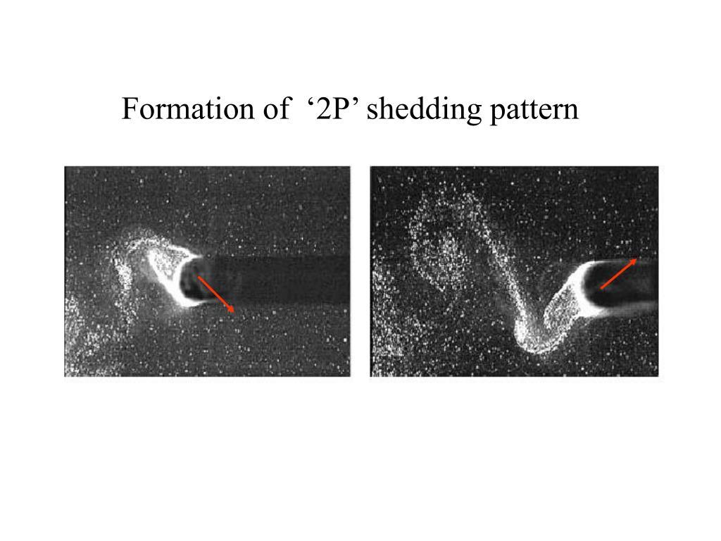 Formation of  '2P' shedding pattern