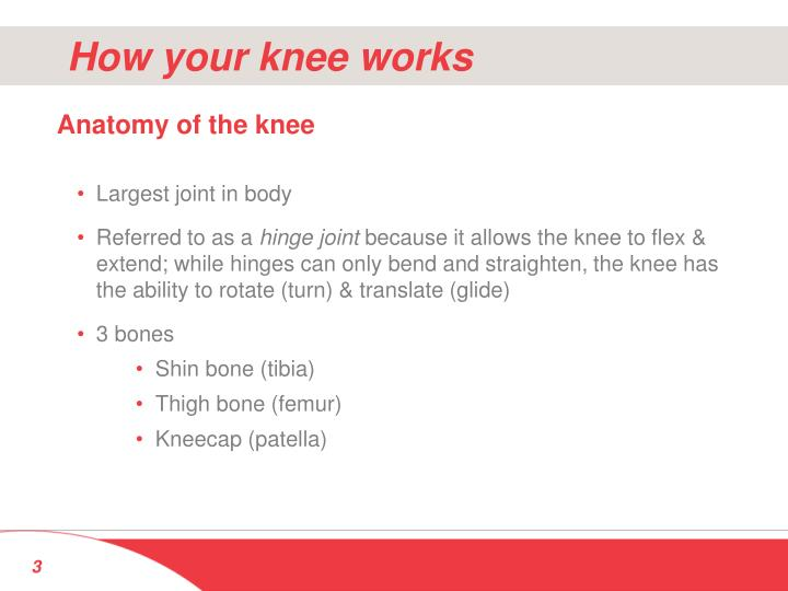 How your knee works