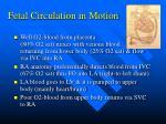 fetal circulation in motion