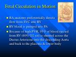 fetal circulation in motion10
