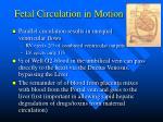 fetal circulation in motion11