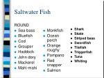 saltwater fish43