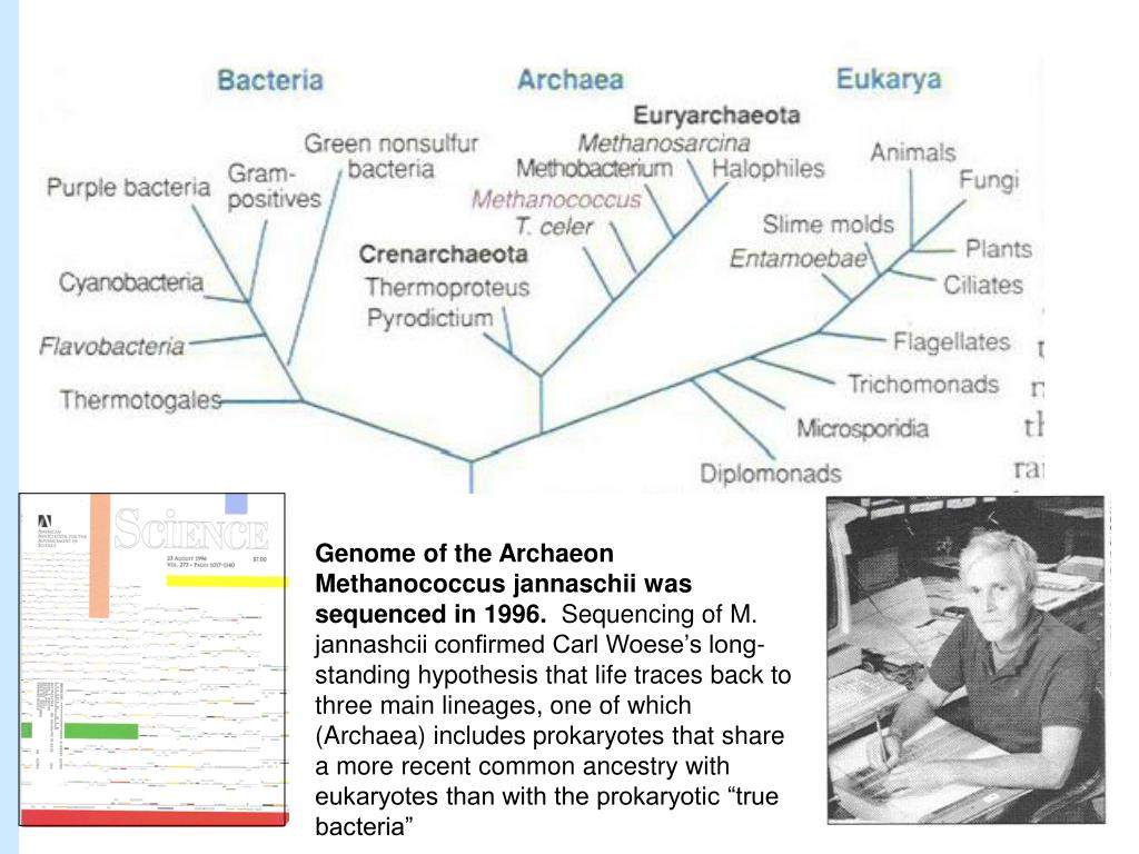 Genome of the Archaeon Methanococcus jannaschii was sequenced in 1996.