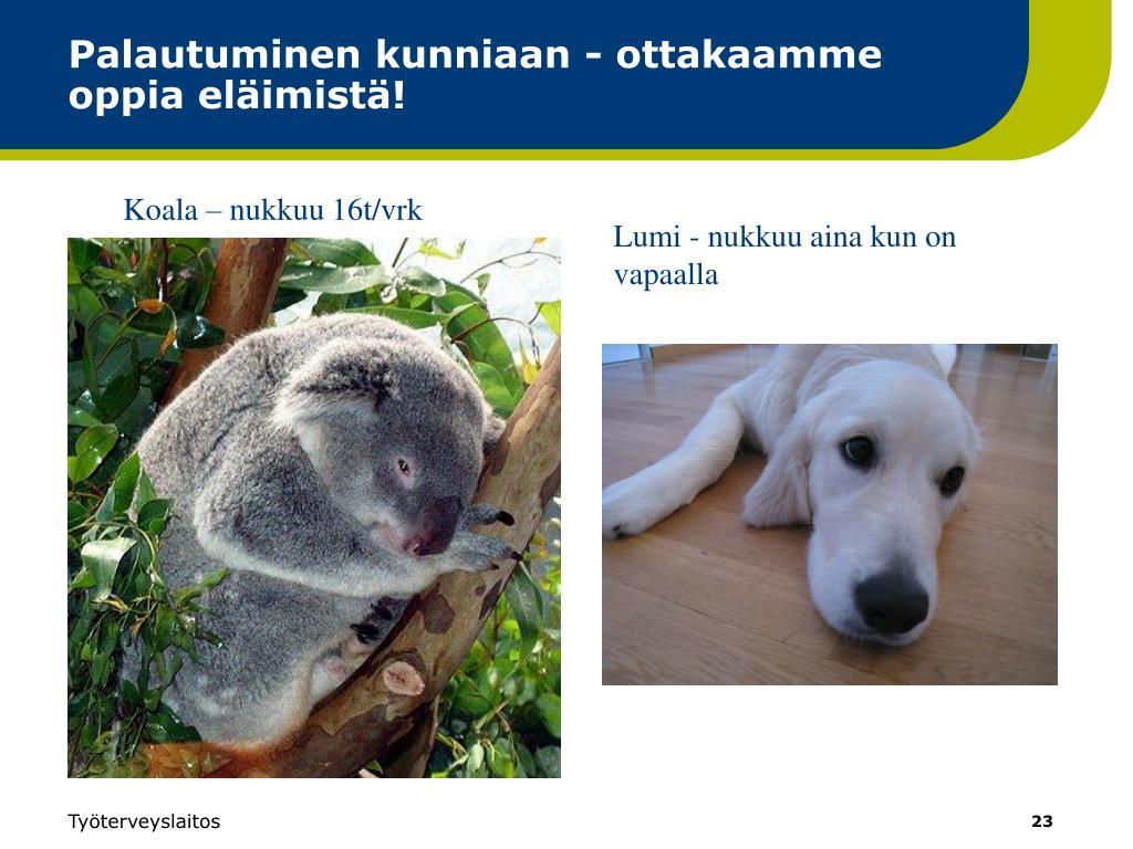 Palautuminen kunniaan - ottakaamme oppia eläimistä!