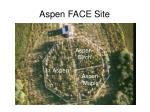aspen face site