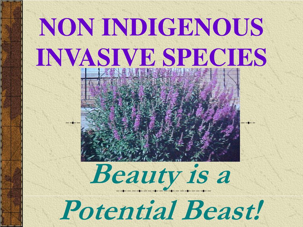 non indigenous invasive species l.