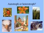 autotroph or heterotroph