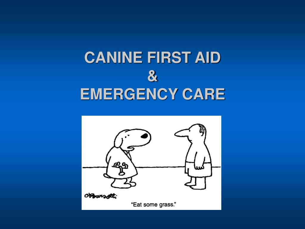 canine first aid emergency care l.