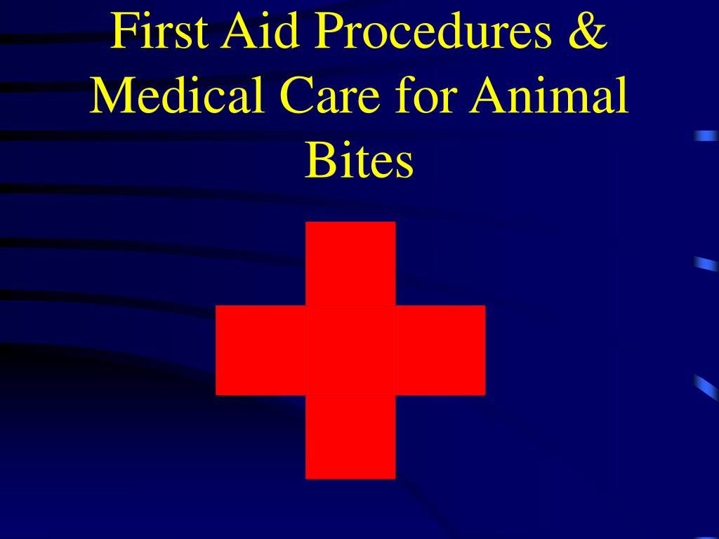 first aid procedures medical care for animal bites l.