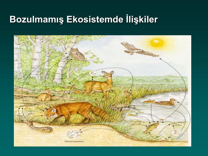 Bozulmamış Ekosistemde İlişkiler