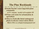 the pine rocklands
