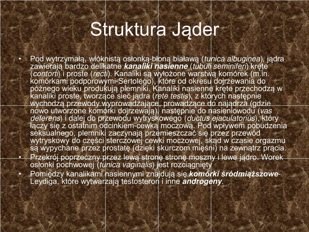 Struktura Jąder