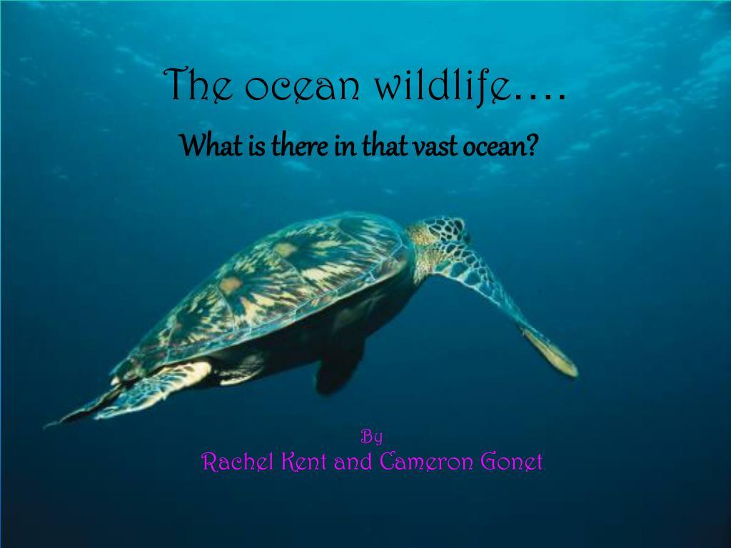 the ocean wildlife l.