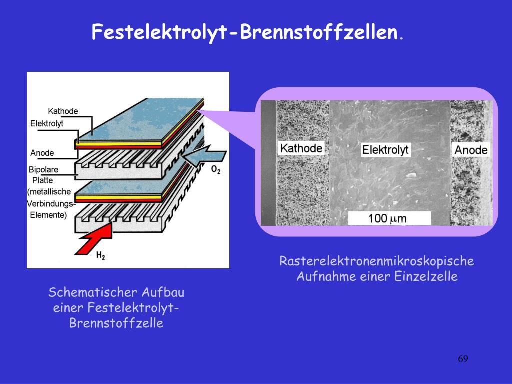 Rasterelektronenmikroskopische Aufnahme einer Einzelzelle