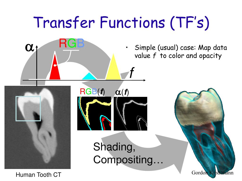 composition of a human tooth