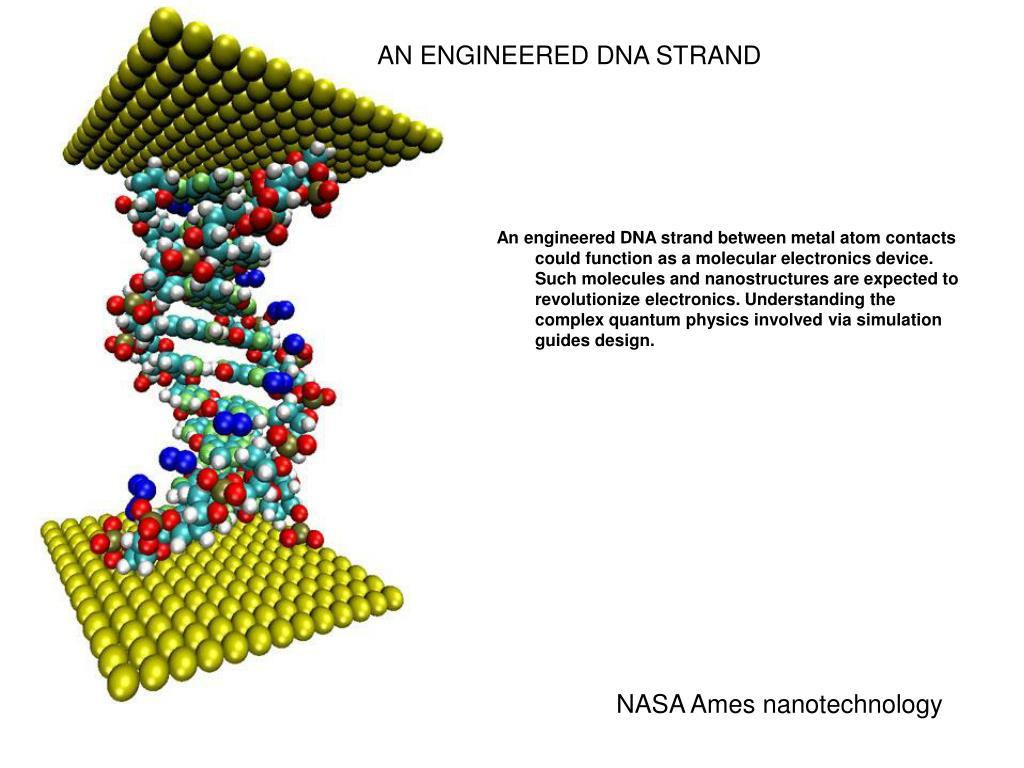AN ENGINEERED DNA STRAND
