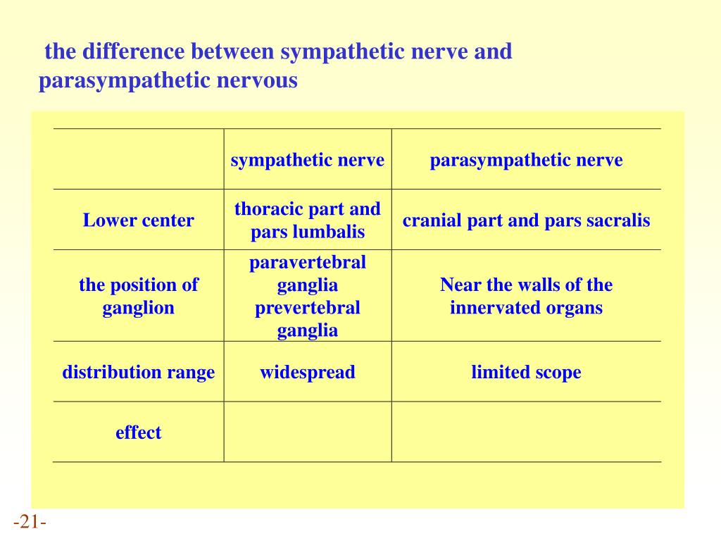 the difference between sympathetic nerve and parasympathetic nervous