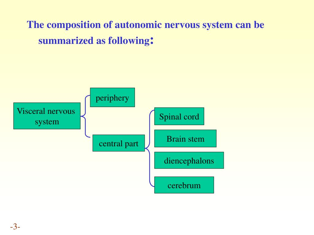 The composition of autonomic nervous system can be summarized as following