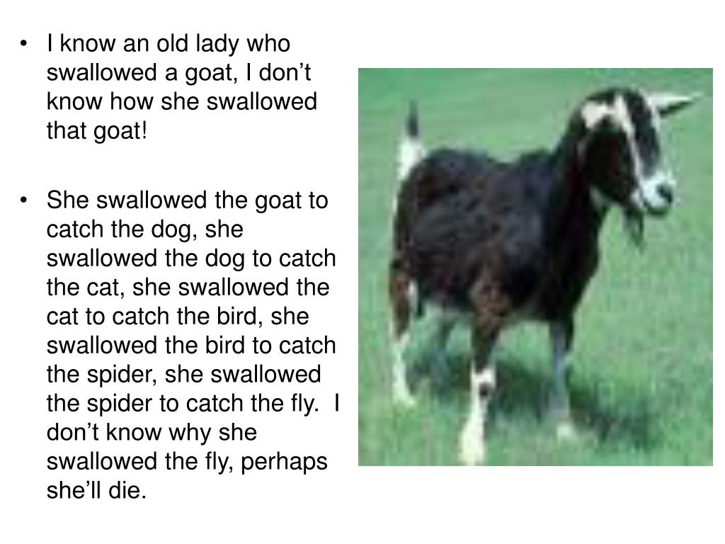 I know an old lady who swallowed a goat, I don't know how she swallowed that goat!