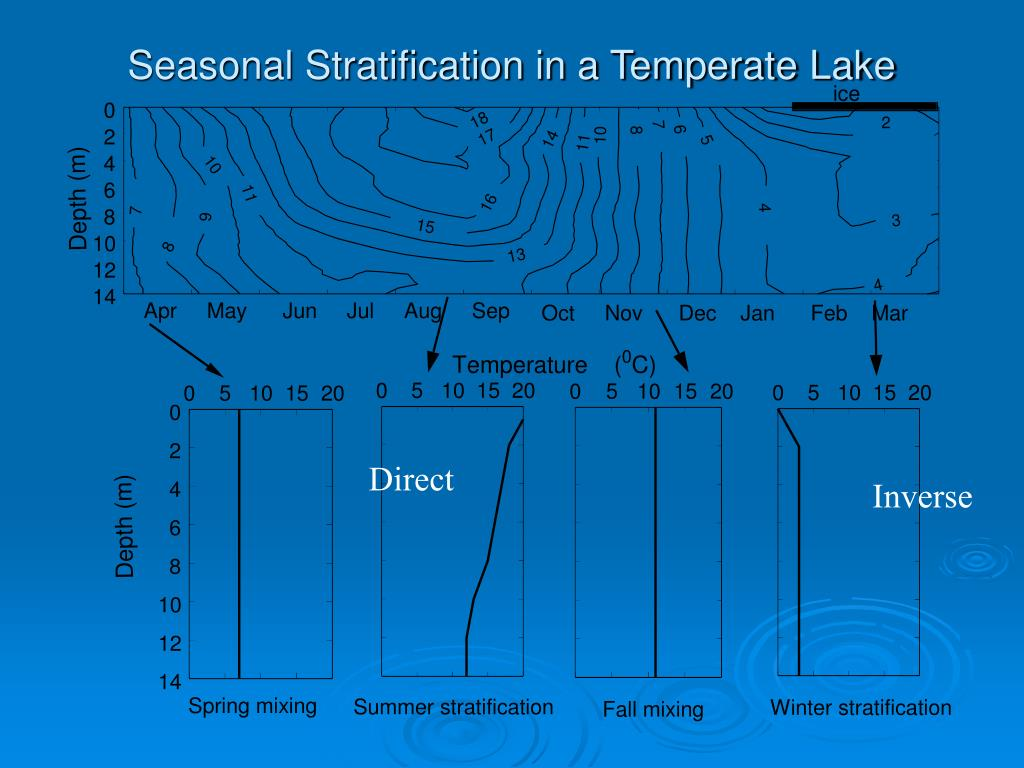 Seasonal Stratification in a Temperate Lake