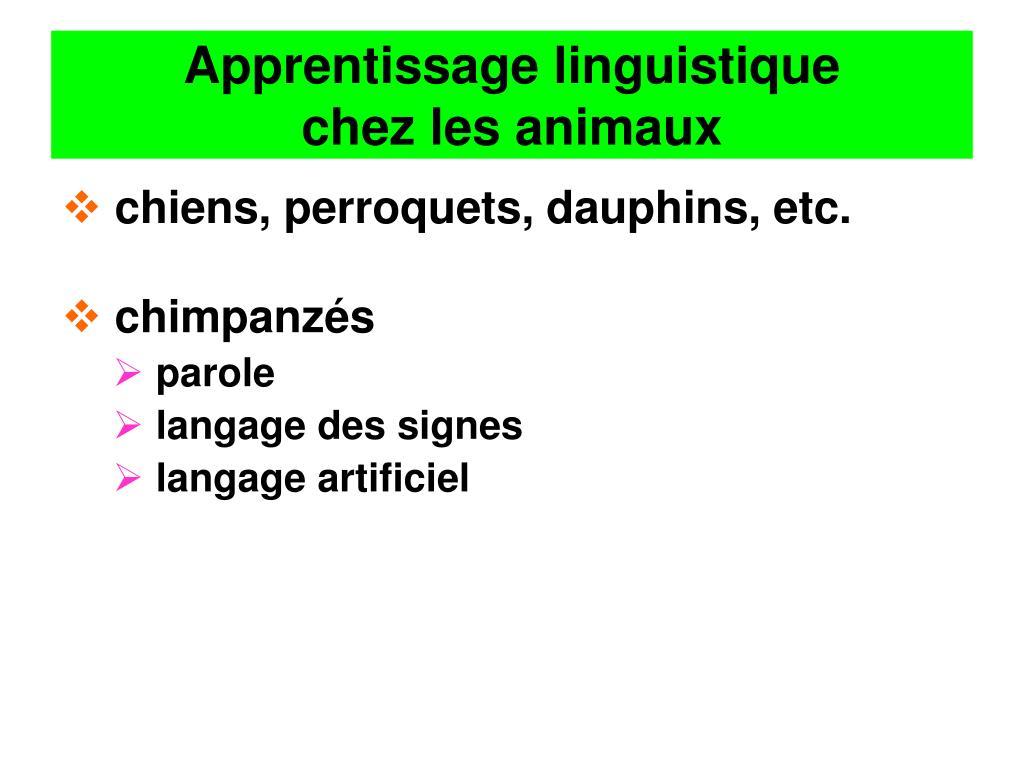 Apprentissage linguistique