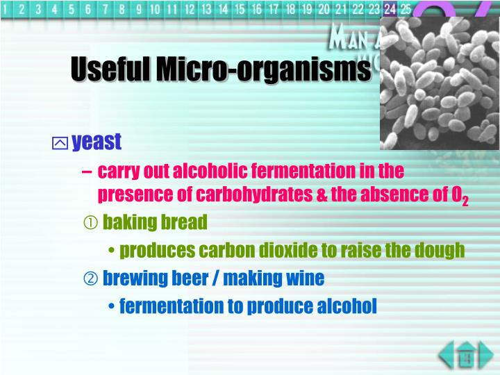 using microorganisms to produce commercial substances young people essay Young people in the organization also lead workshops and grow food as part of a cooperative that sells produce to the cafe, local corner stores, restaurants and others, including tenants of.