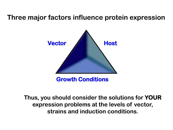 Three major factors influence protein expression