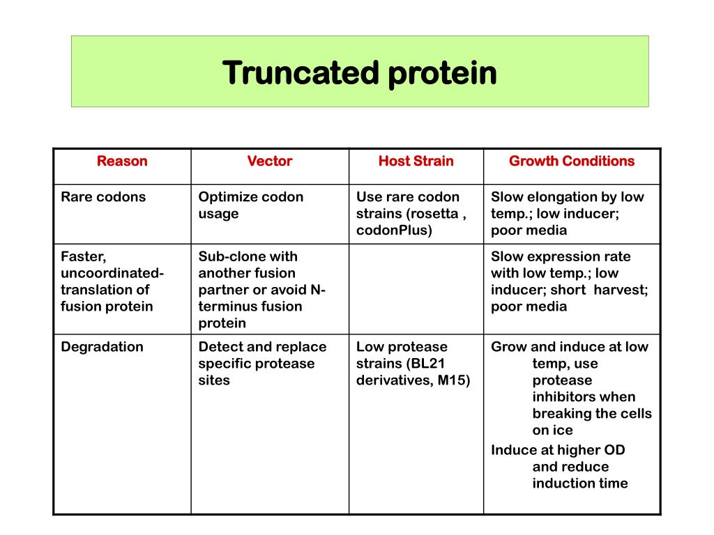 Truncated protein