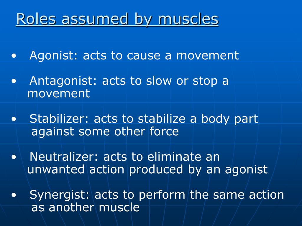 Roles assumed by muscles