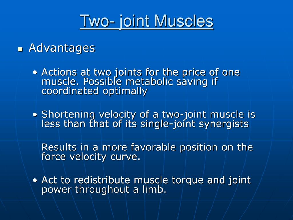 Two- joint Muscles
