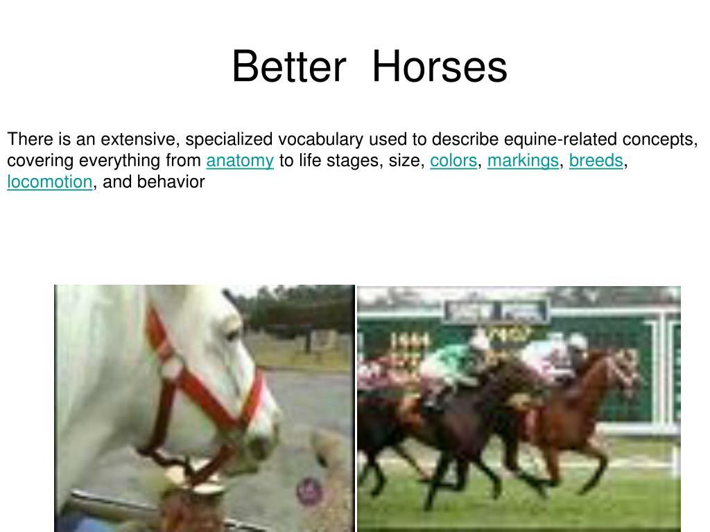 better horses l.