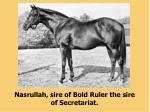 nasrullah sire of bold ruler the sire of secretariat