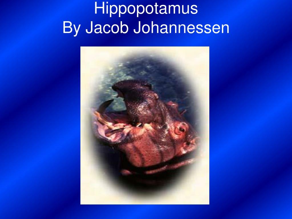 hippopotamus by jacob johannessen l.