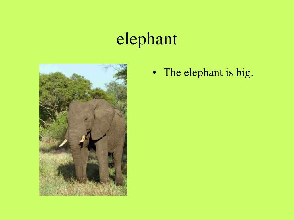 elephant l.