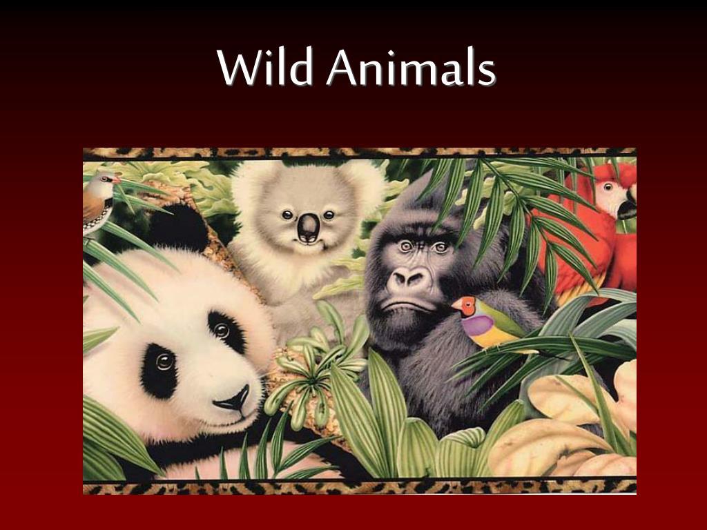 wild animals l.