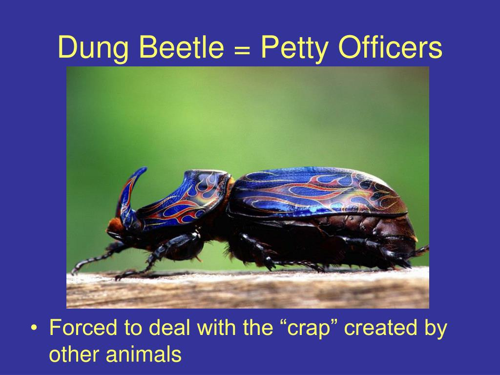 Dung Beetle = Petty Officers
