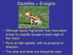 gazelles ensigns