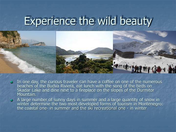Experience the wild beauty