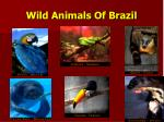 wild animals of brazil