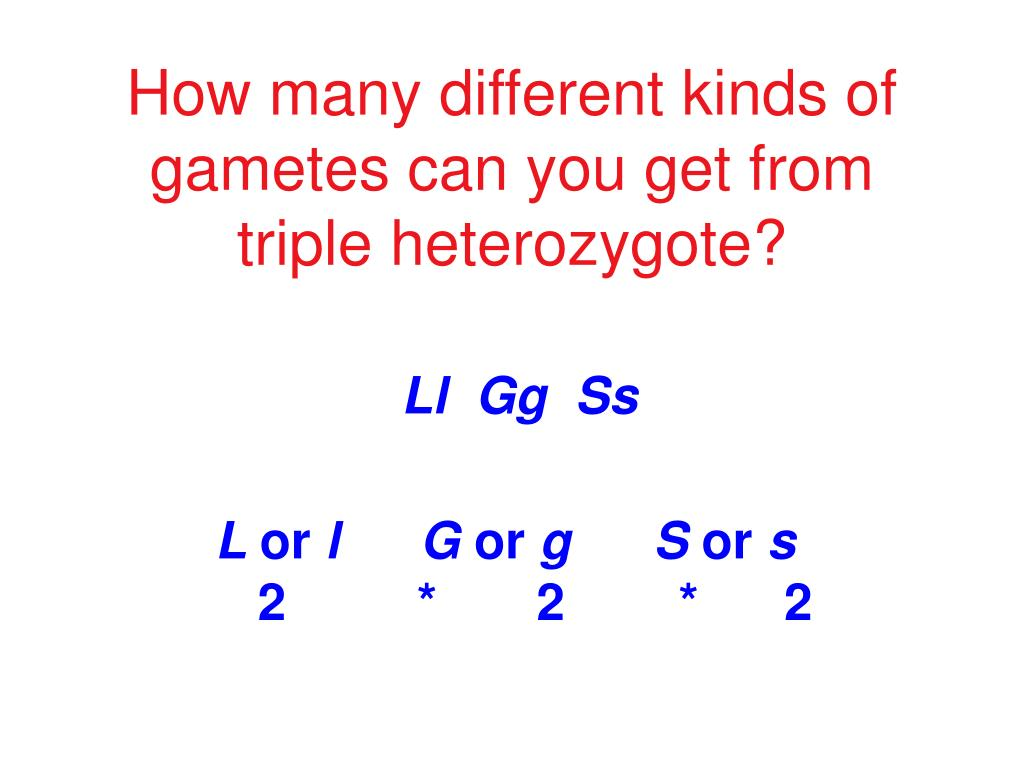 How many different kinds of gametes can you get from triple heterozygote?