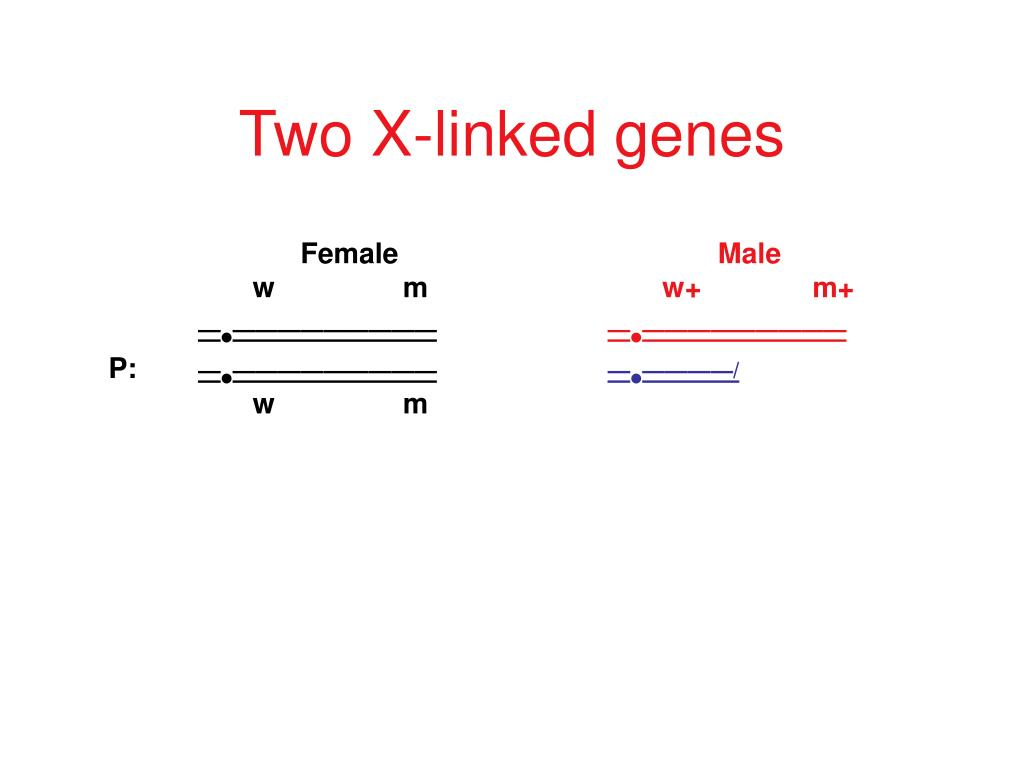 Two X-linked genes