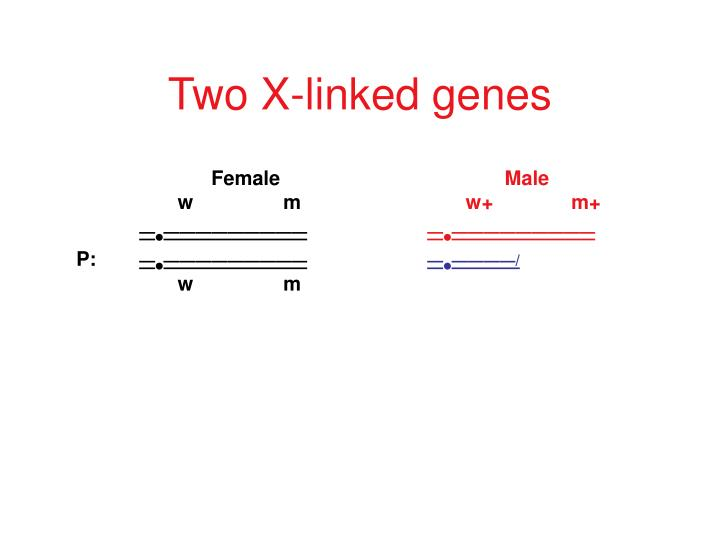 Two x linked genes