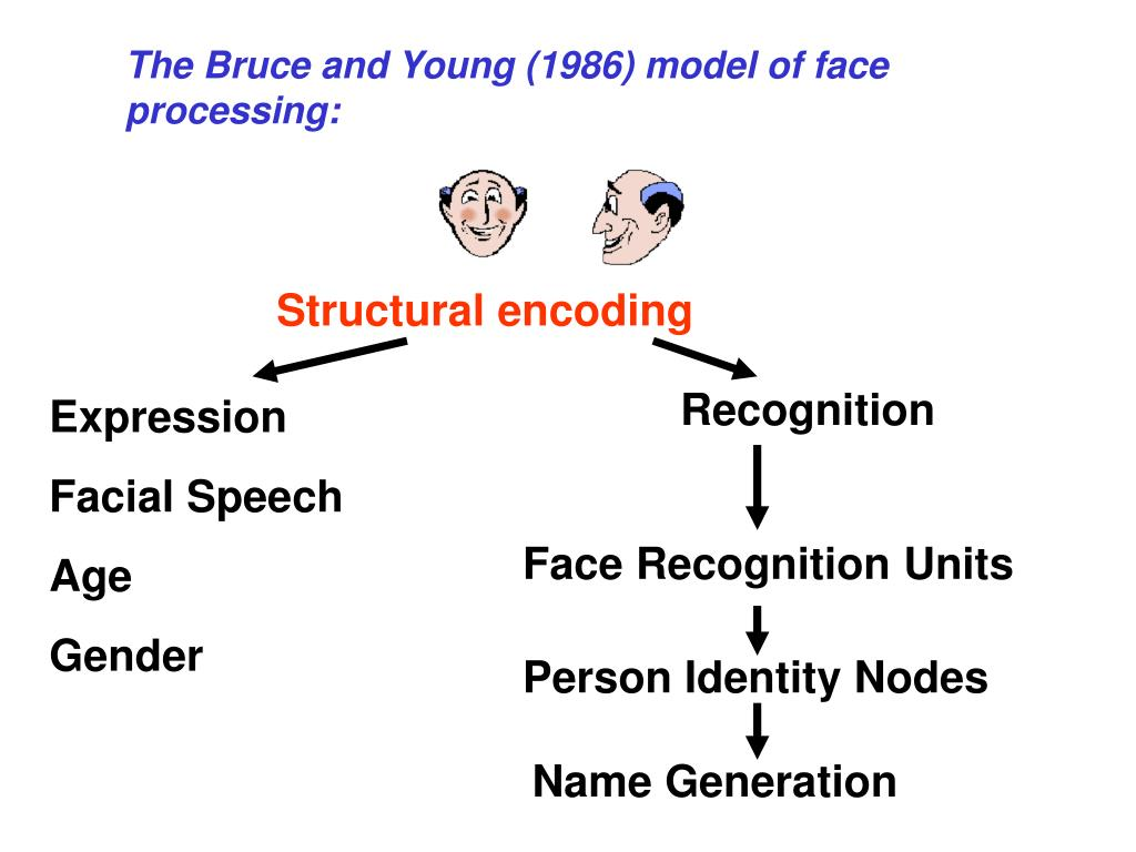 The Bruce and Young (1986) model of face processing: